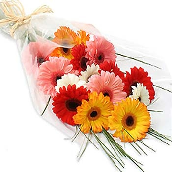 12 GERBERA BOUQUET